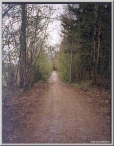 Ankerveien. Skogsvei fra Garlaus mot Lønli. Foto: Arnstein Kirste 1997/Bærum bibliotek